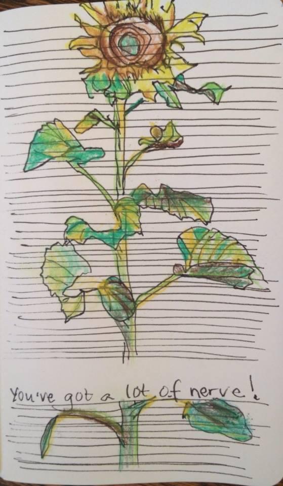 nervy sunflower